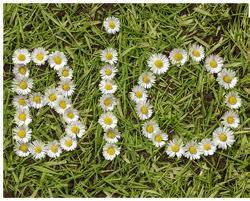 "The word ""BIO"" spelled out in daisies on a lawn"