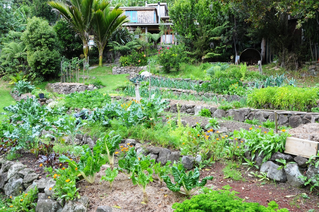 Extensive vege garden at Kath's and Bert's place, Mamaki.