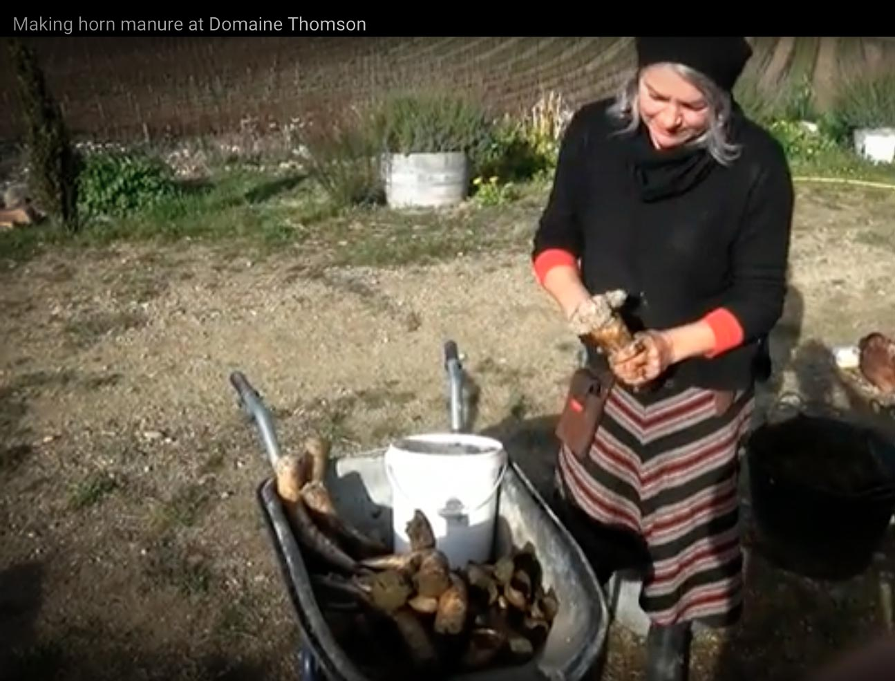 Su Hoskin at Domaine Thomson, Central Otago, New Zealand, demonstrates how to make biodynamic horn manure